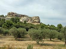 olive2013.jpg